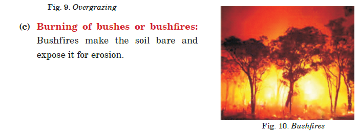 burning of bushes