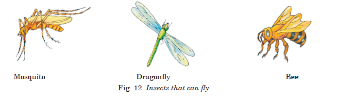 Fig. 12. Insects that can fly