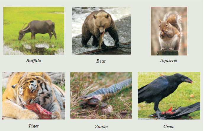 Grouping Animals According to the Feeding Mode