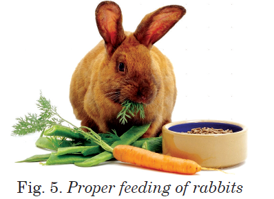 Proper feeding of rabbits