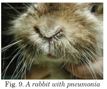 A rabbit with pneumonia