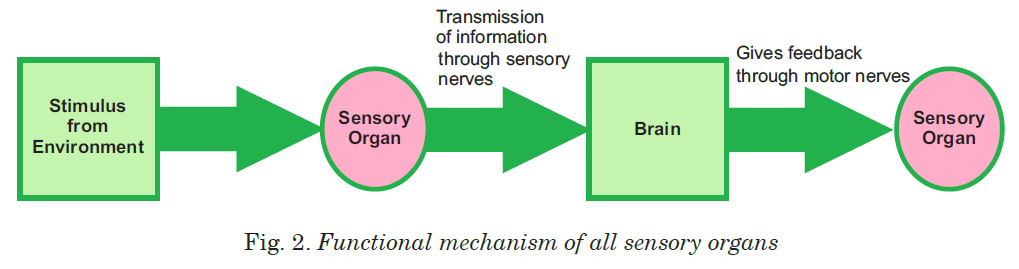 Fig. 2. Functional mechanism of all sensory organs